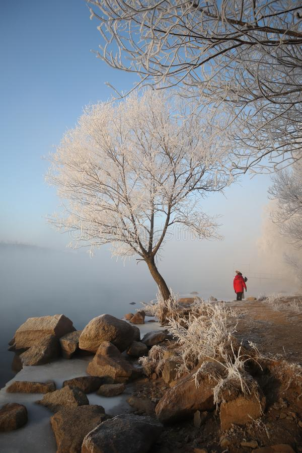 Rime in winter. The photo was taken in jilin, China. A beautiful winter scene royalty free stock images