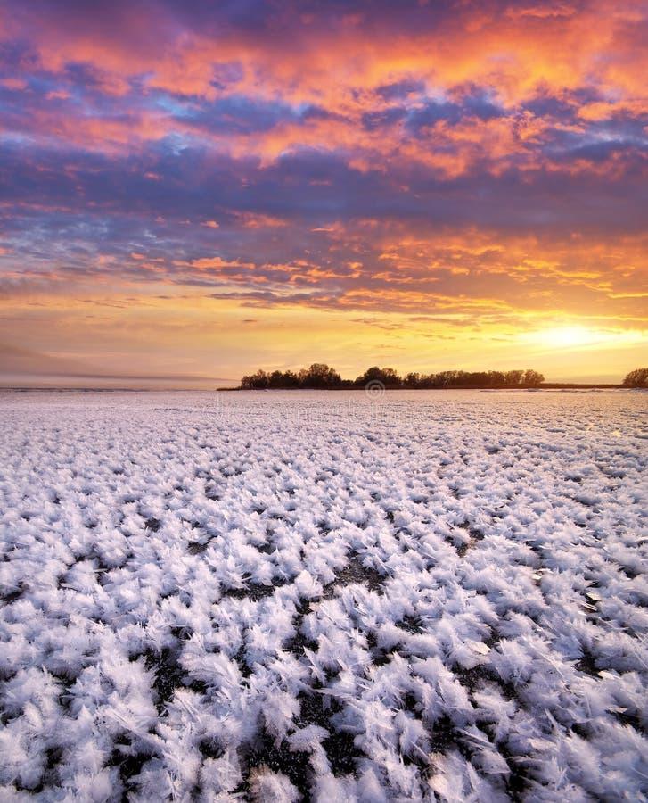 Rimfrost på djupfryst is arkivbilder