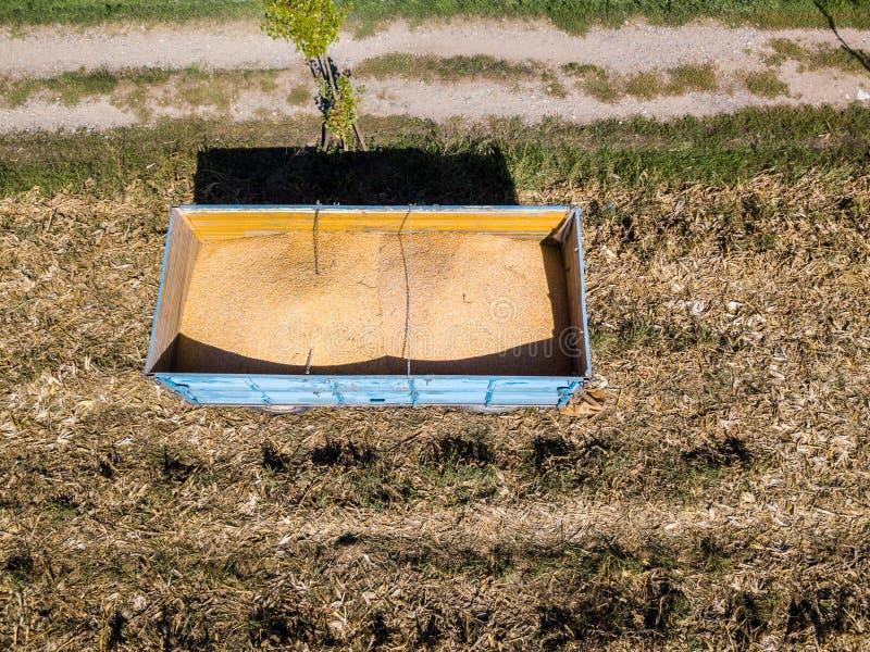 Rimorchio del mais, cereale che raccoglie dal campo Mais immagini stock
