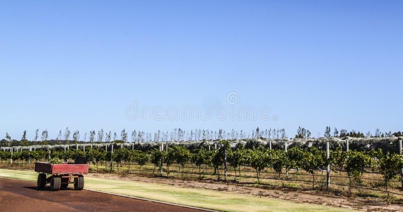 Rimorchio dell'azienda agricola accanto ad una piantagione immagine stock libera da diritti