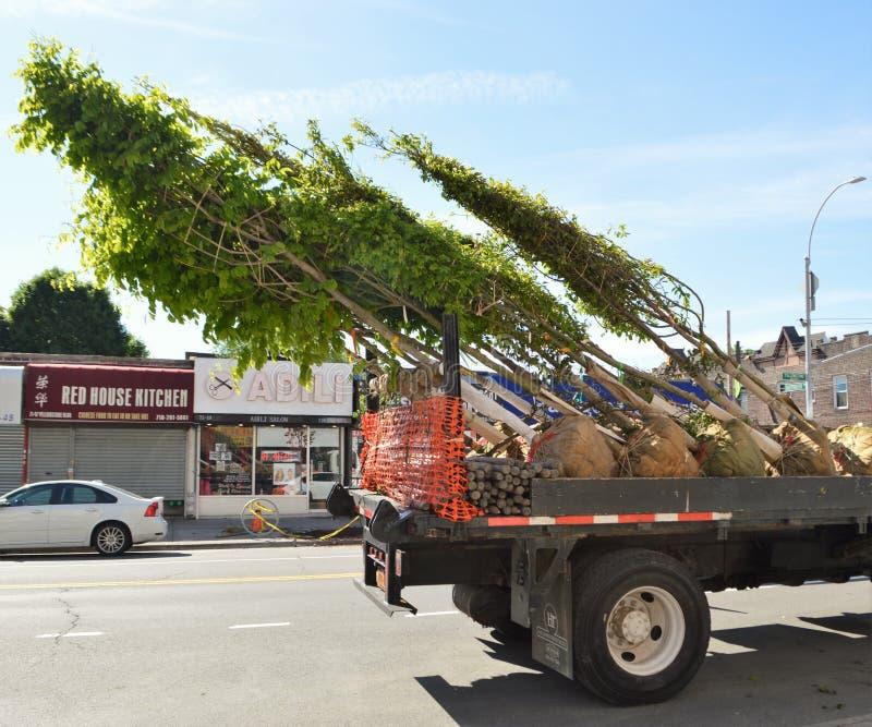 Rimozione dell'albero sul camion immagini stock