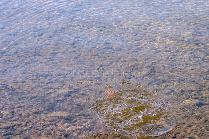 Rimpelingen op water in het meer Vättern in Zweden stock afbeelding