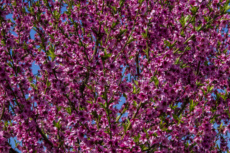 Rincez des fleurs photos stock