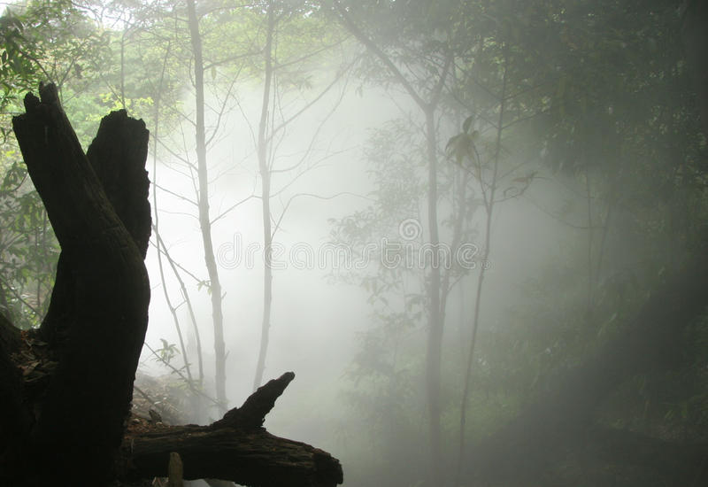 Rincon de la Vieja National Park, Costa Rica. Steam Rising in Rincon de la Vieja National Park, Costa Rica royalty free stock photography