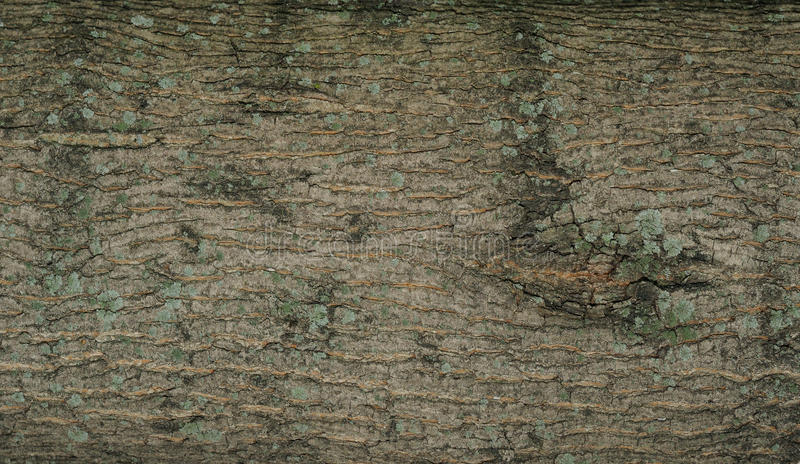 Rind background with moss stock photography