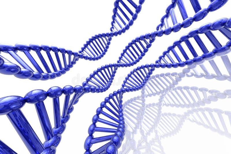 Rinda de la DNA imagen de archivo