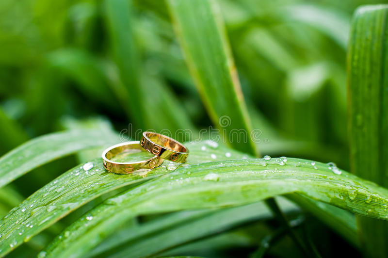 Download Ring Royalty Free Stock Images - Image: 32430199