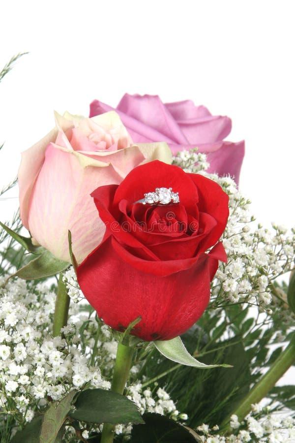 Ring in Rose stockfotos