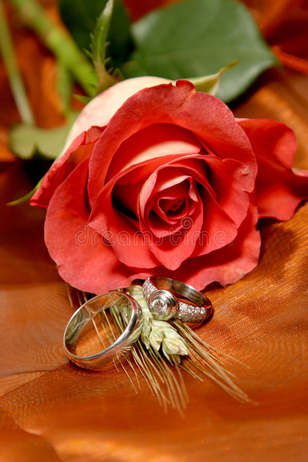 Ring Roses royalty free stock image