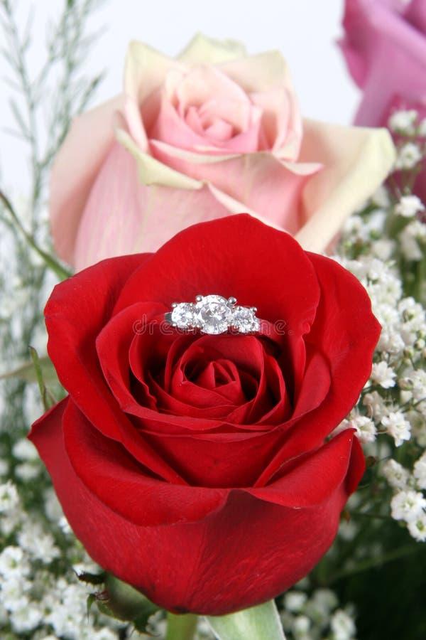 Ring in roter Rose, Nahaufnahme stockfotografie