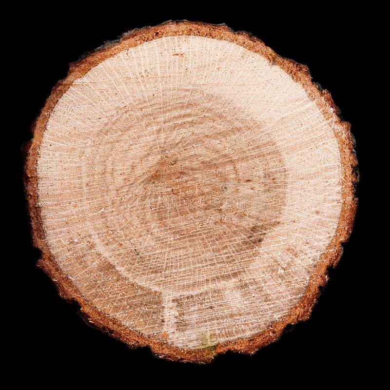 Ring Tree arkivfoton