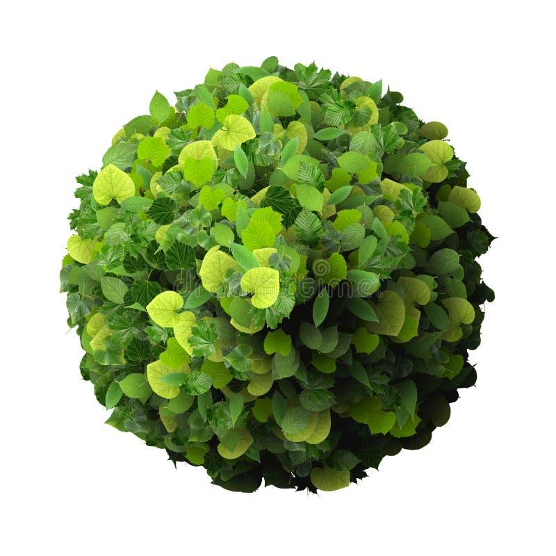 Ring van groene bladeren wordt gemaakt dat vector illustratie