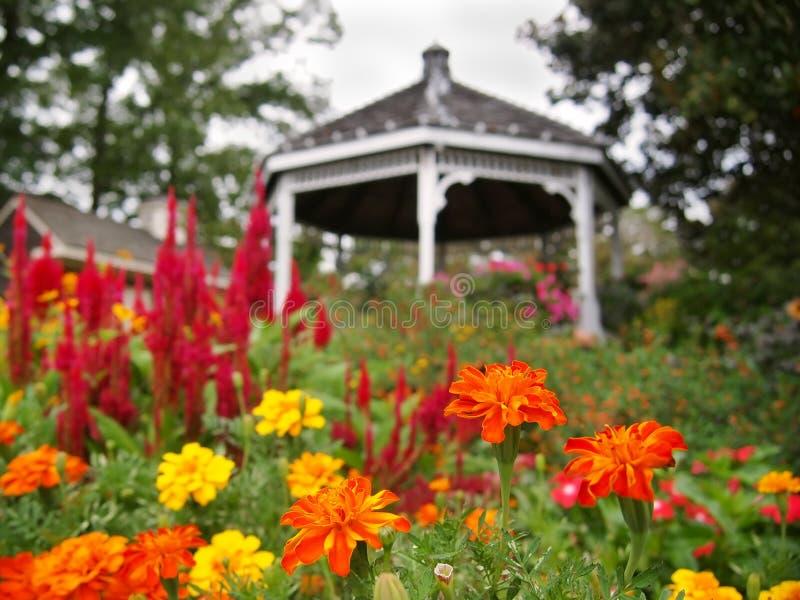 RingblommaGazeboträdgård royaltyfri bild