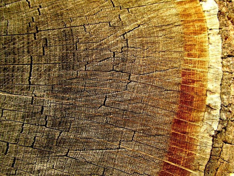 Ringe der Baumrinde lizenzfreies stockbild