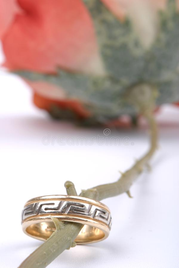 Download Ringed Stem stock photo. Image of marrying, joining, vows - 57270