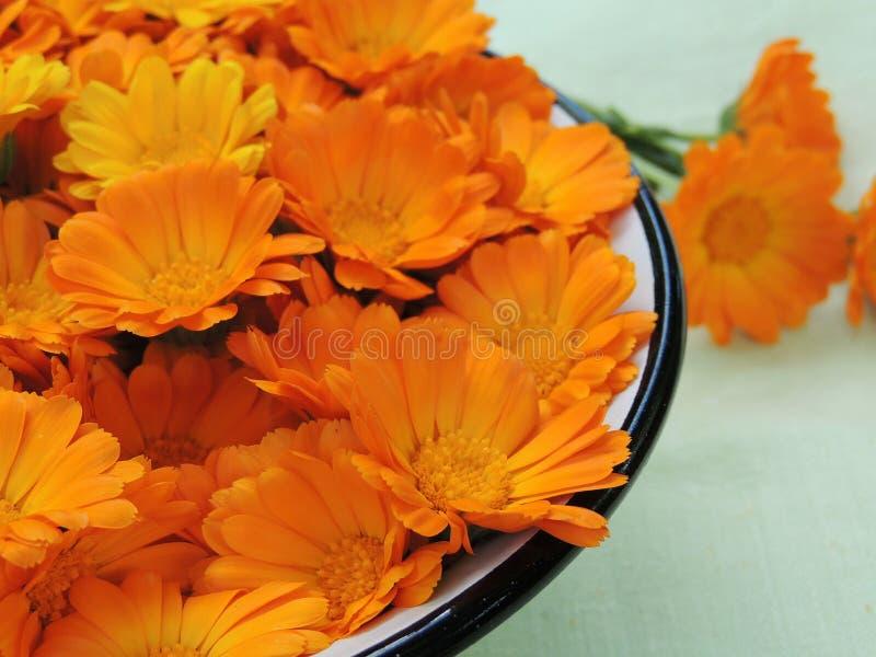 Ringelblume Calendulablumen in einer Schüssel stockfoto