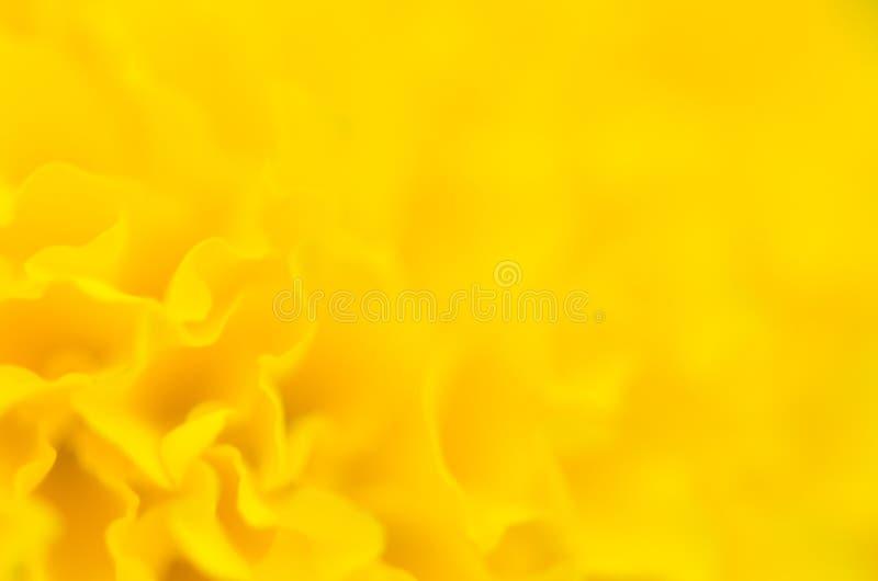 Ringelblume eine Anlage im Garten am Sommer unter Sonnenlicht, gewöhnlich mit Gelb, Naturhintergrund, abstrakte Hintergründe, aus stockfoto