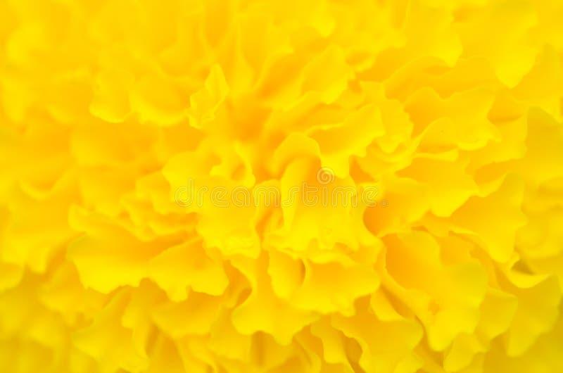 Ringelblume eine Anlage im Garten am Sommer unter Sonnenlicht, gewöhnlich mit Gelb, Naturhintergrund, abstrakte Hintergründe, aus lizenzfreie stockfotos