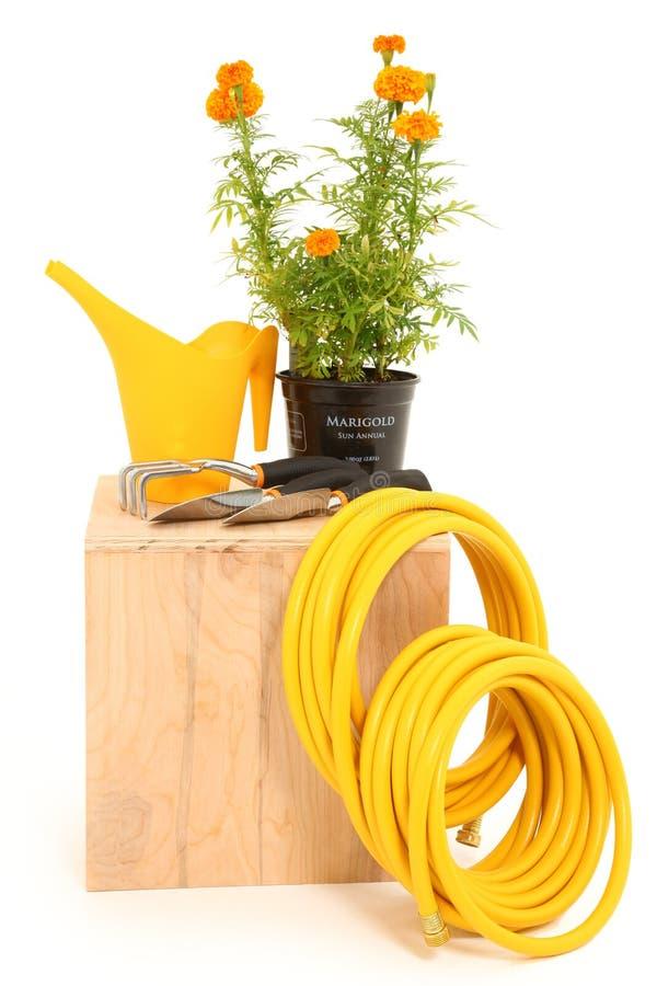 Ringelblume-Garten-Hilfsmittel lizenzfreies stockbild