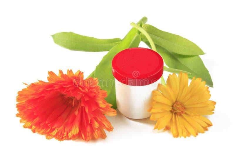 Ringelblumeblume stockfotografie