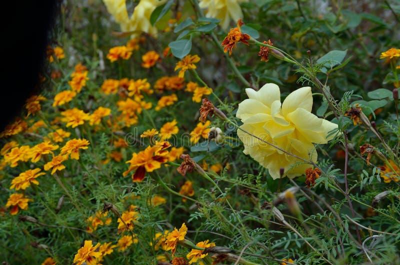 Ringelblumen-Blumen und gelbe Rosen lizenzfreies stockfoto