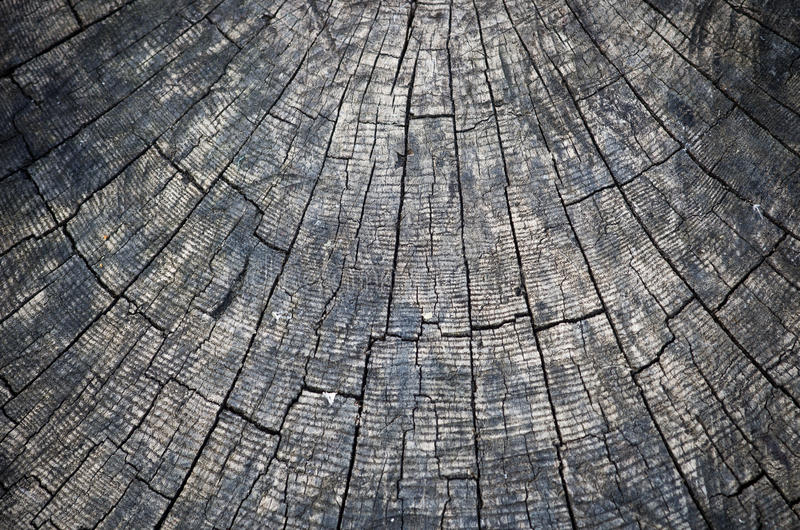 Ringen in oude droge boomstomp stock foto