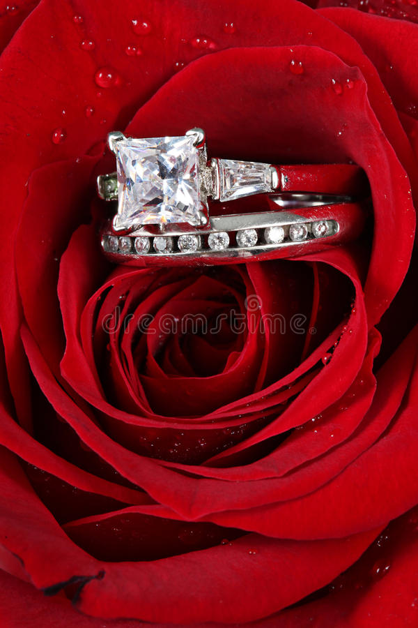 Ringen in rode roze bloemblaadjes stock foto's