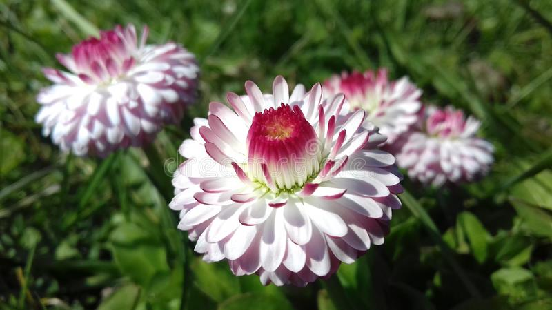 Ringen van bloemen royalty-vrije stock afbeeldingen