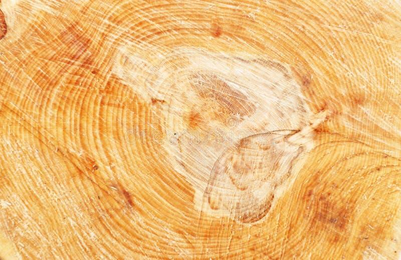 Ringen van een boom in een besnoeiing stock foto