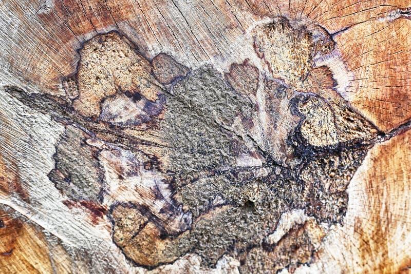 Ringen van een boom in een besnoeiing stock fotografie