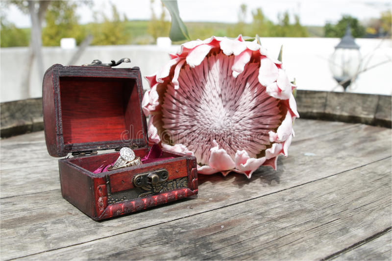 Rings in a box with Protea royalty free stock photography