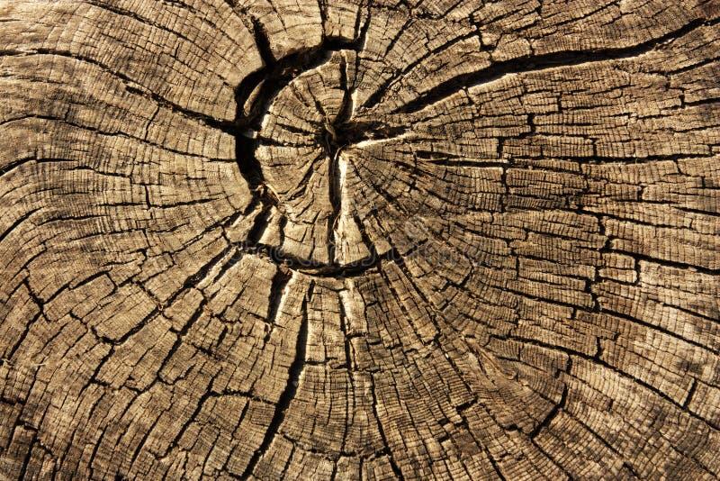 Rings in old dried tree stump