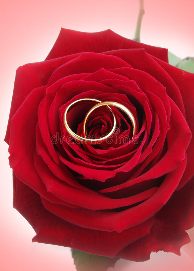 Rings with rose royalty free stock image