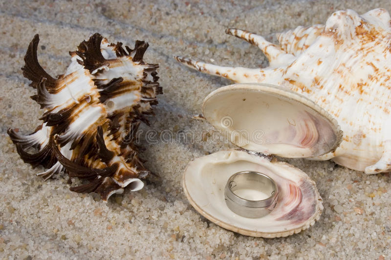 Download Rings in Seashell stock photo. Image of sand, water, weddings - 12788862