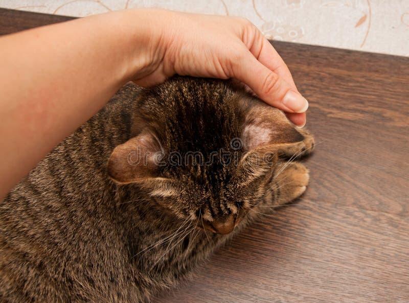 Ringworm bij kat stock afbeeldingen