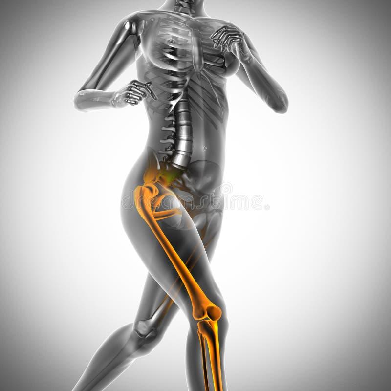 Rinnande bild för kvinnaröntgenfotograferingbildläsning stock illustrationer