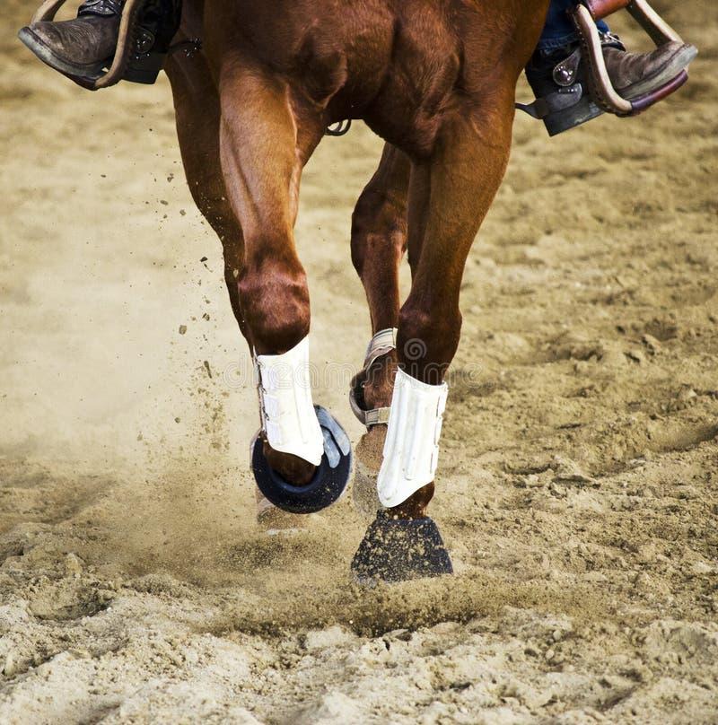 Rinnande brun häst fotografering för bildbyråer