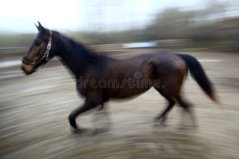 Rinnande häst royaltyfri bild