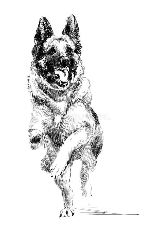 Rinnande hund för tysk herde royaltyfri illustrationer