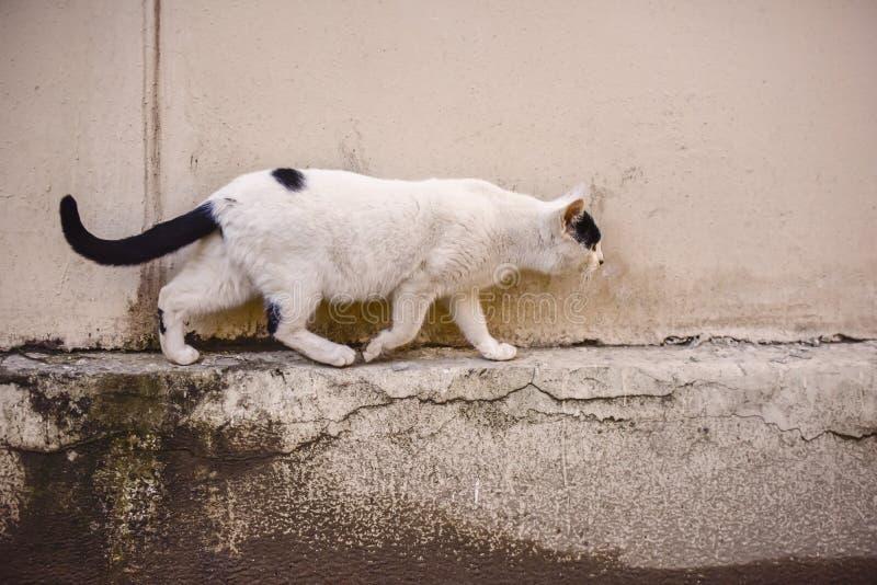 Rinnande katt på gatan royaltyfri foto