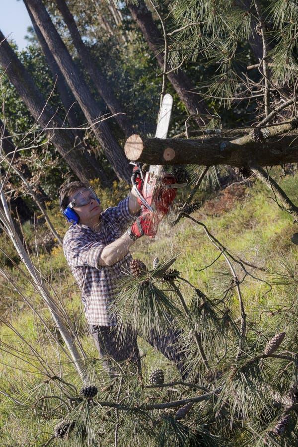 Lumberjack med chainsawen arkivbilder