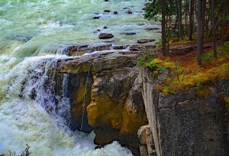 Rinnande vatten Sunwapta Falls från den Sunwapta floden i nationalparkjaspisen, Alberta, Kanada fotografering för bildbyråer