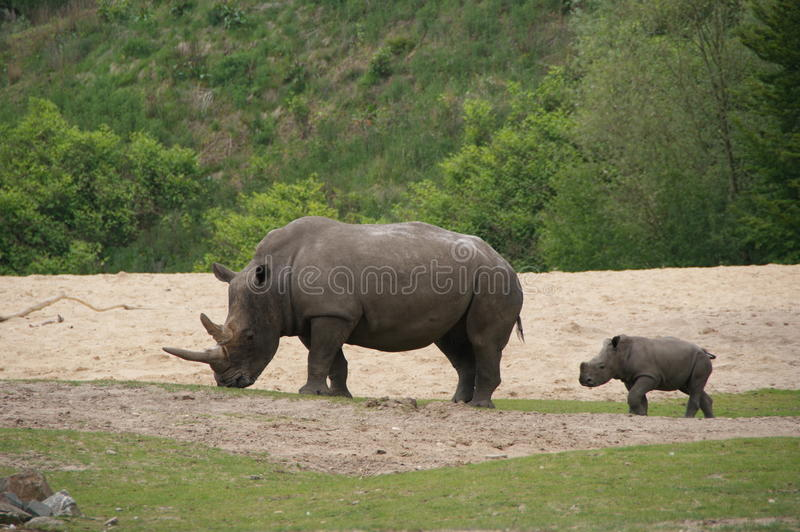 Rino and Young stock photo