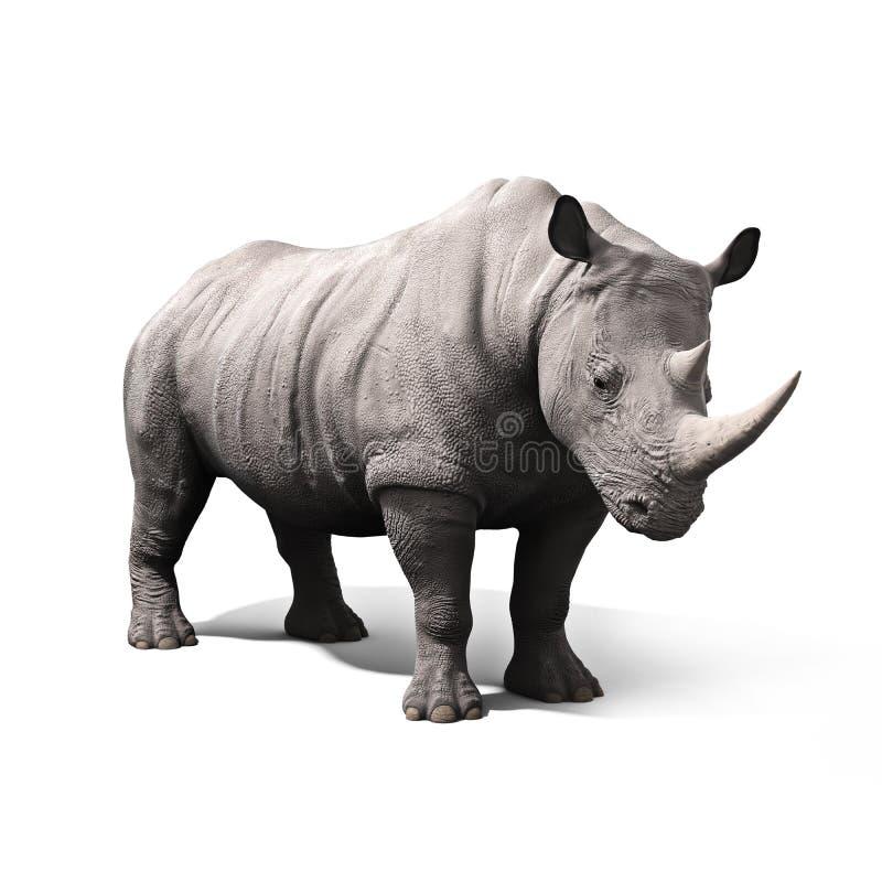 Rinoceronte aislado en un fondo blanco foto de archivo