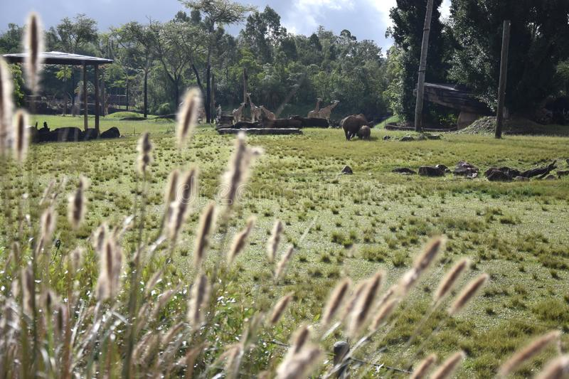 Rinoceronte blanco meridional en el objeto expuesto africano del safari foto de archivo libre de regalías