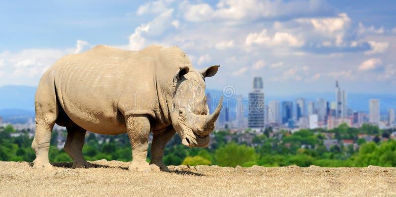 Rinoceronte con la ciudad en del fondo imagen de archivo libre de regalías