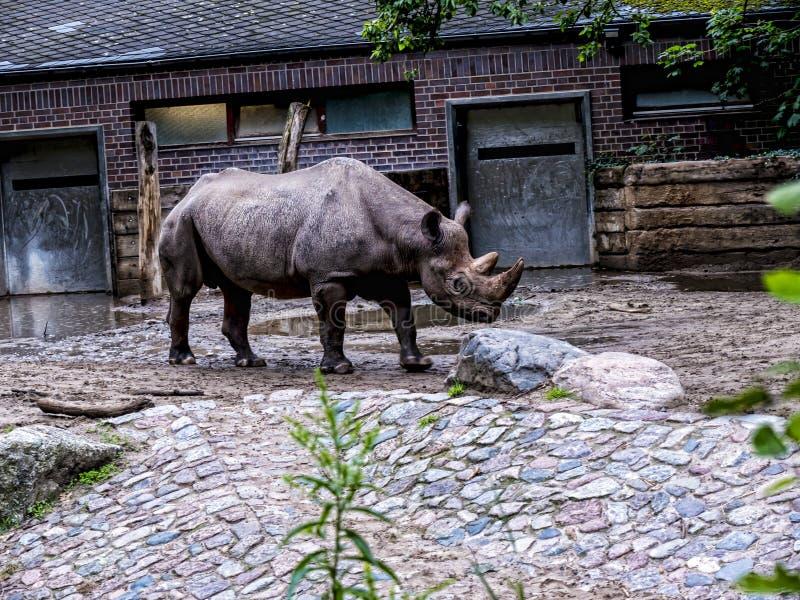 Rinoceronte em Berlin Germany imagem de stock royalty free