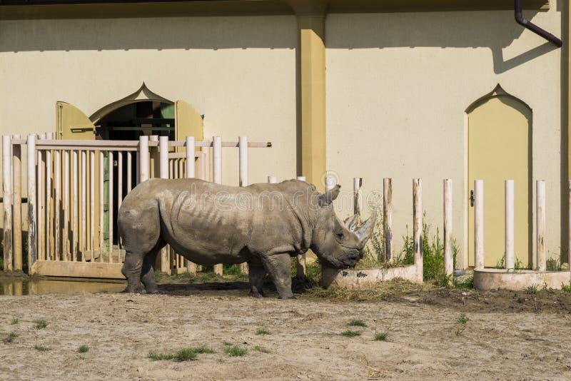 Rinoceronte en el parque zoológico imagenes de archivo