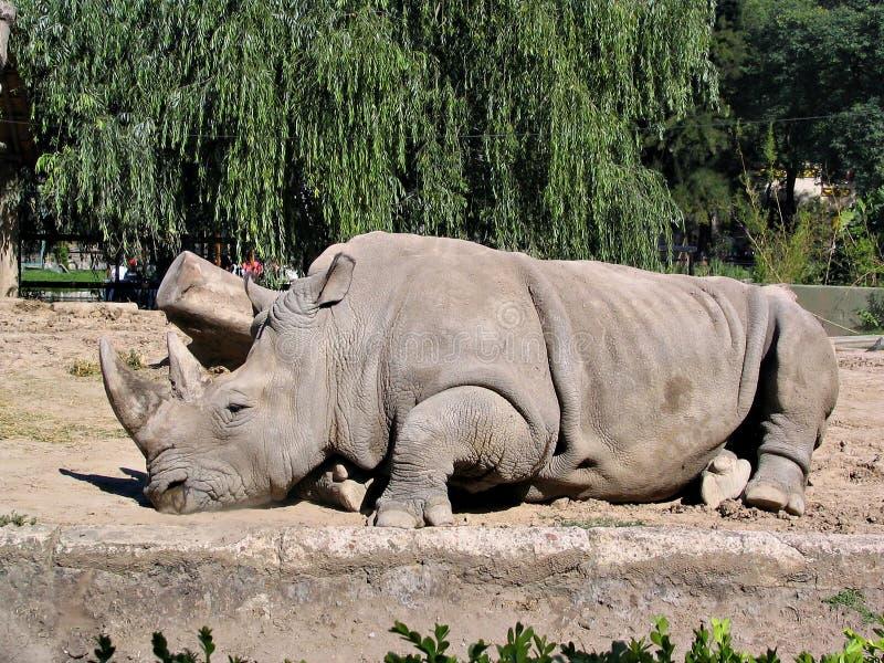 Rinoceronte en el parque zoológico 2 imagen de archivo libre de regalías