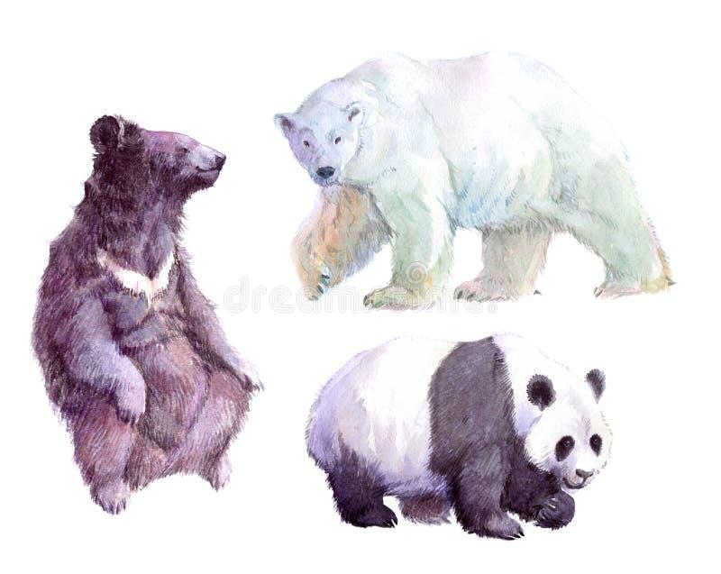 Rinoceronte realístico da aquarela, urso branco, urso pardo, animal ilustração royalty free